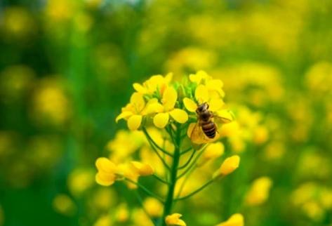 Bienen unterstützen und unterstützt werden